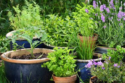 Frische Gartenkräuter im Feng Shui Garten