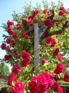 Rosen im Feng Shui Garten
