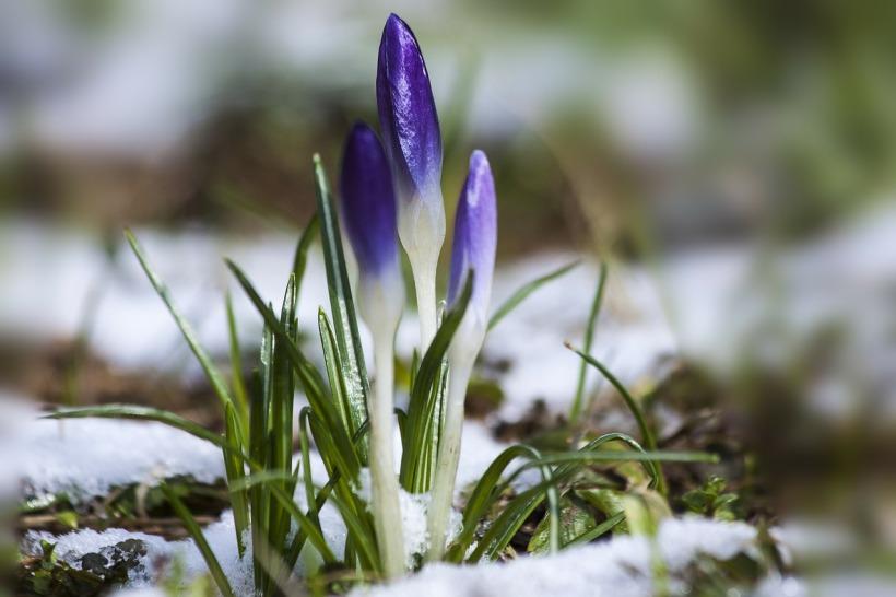 Auch unter dem Schnee ist das Neue schon da