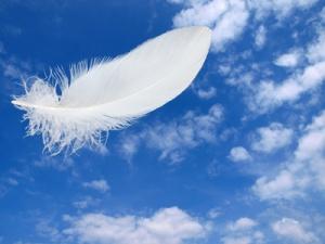 Feder im Himmel
