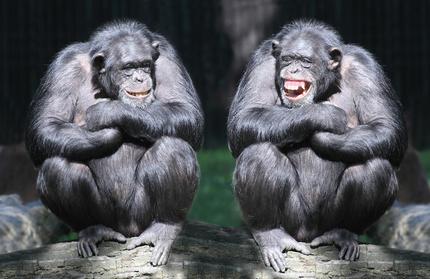 Jahr des Affen 2016