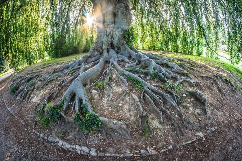 Die sinnliche Berührung von Holz und Erde
