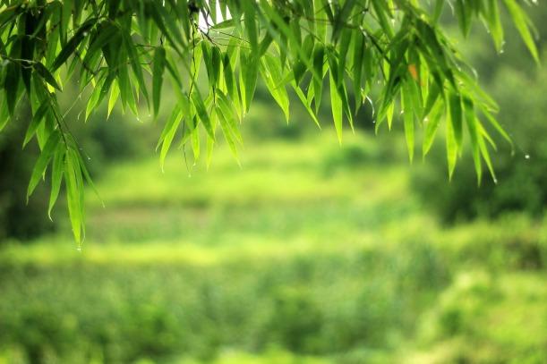Bambus im Feng Shui Garten