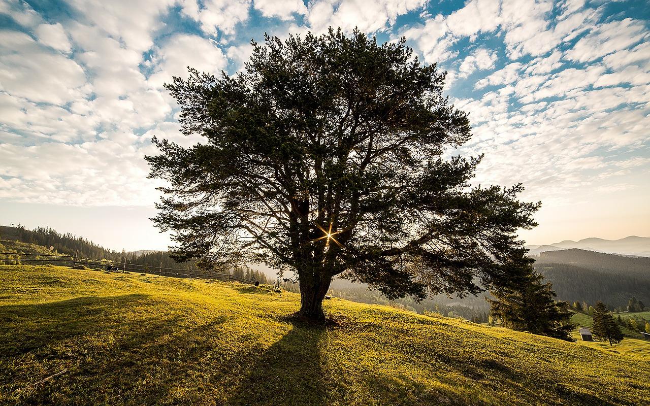 Einzeln und frei wie ein Baum